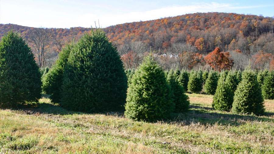 Christmas Tree Growers In New Jersey