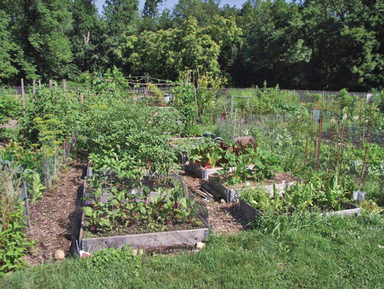 Community Gardens in New Jersey
