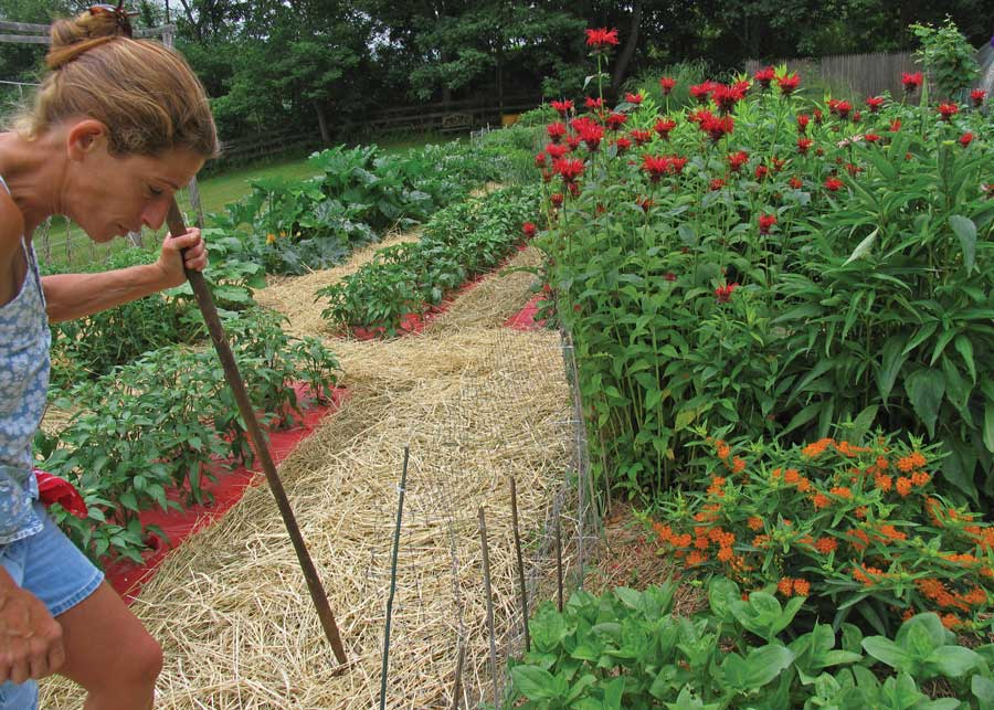 Vegetable gardening in New Jersey