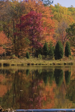 Fall foliage in Stokes Forest