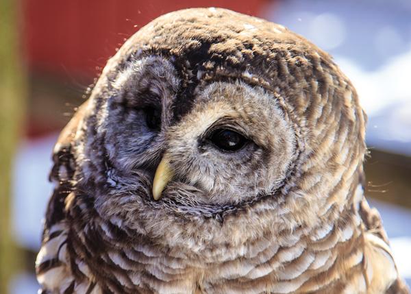 Owl Spotting in New Jersey Northwest