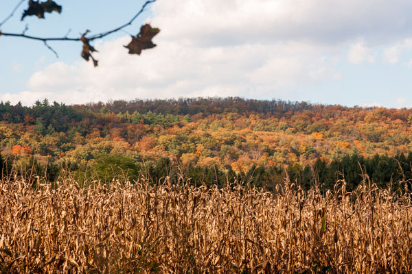 Fall Foliage in New Jersey's Walpack Valley